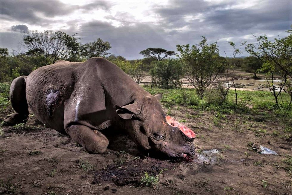 "Brent Stirton, ""Memorial to a species"""